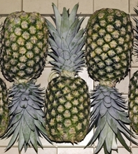 Fresh tropical pineapple