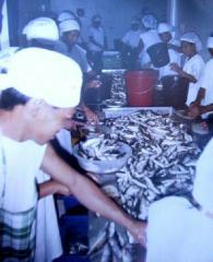 Sardines  fresh
