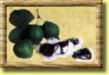 Tropical guava dried