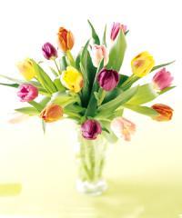 Bouquet Gift Pet