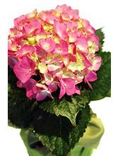 Flower Treasure