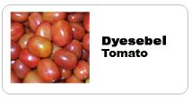 Hybrids of tomato seeds