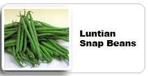 Seeds Asparagus Beans