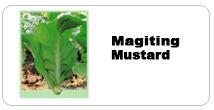 Mustard Seeds Hybrid