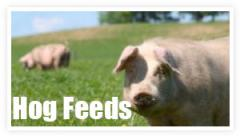 Pig Feed Home