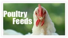 Feed for Poultry