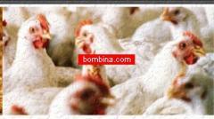Nucleoforce Poultry