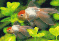 Aquaculture Protection Product