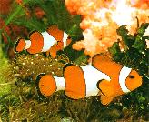 AMEV Complete Aquaculture