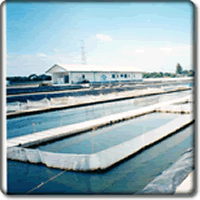 PHILNOR Aqua Hatchery