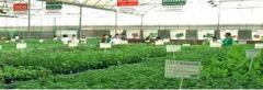 Herbs  Naturale