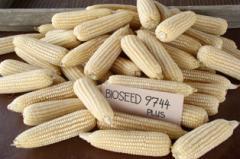 Corn Sugar Elite BIO 9744