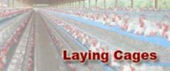Layer Cages Allow Chickens