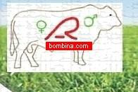 Performance Breeding Bulls Semen For Crossbreeding