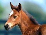 Sprayfo Foal milk