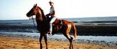 Thoroughbred Horses
