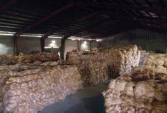 Primary Raw Material of Manila Ropes