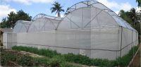Greenhouses Farm 1