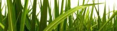 Roxas Ethanol Plant