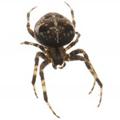 Pest Management Division