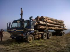 Tropical Timber Export Product Array