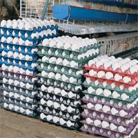Poultry Products » Eggtray
