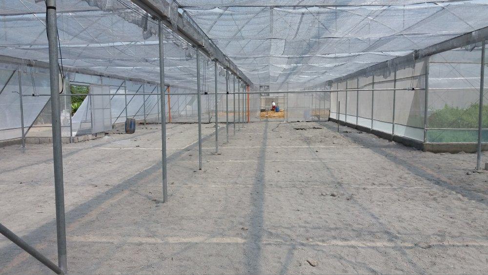 greenhouse-multi-span-640sqm-20mx32m