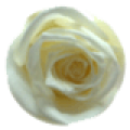 Rose color 	