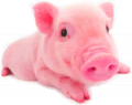 Biokorma for pigs.