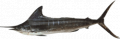Nairagi