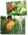 Elite Hybrids Seeds Vegetables