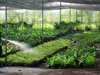 Order Plant Nursery