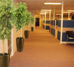 Order Office Plants Rental Services