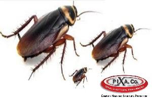 Order Pixa Company (Pest & Termite Control)
