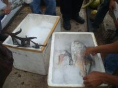 Delivery of seafood